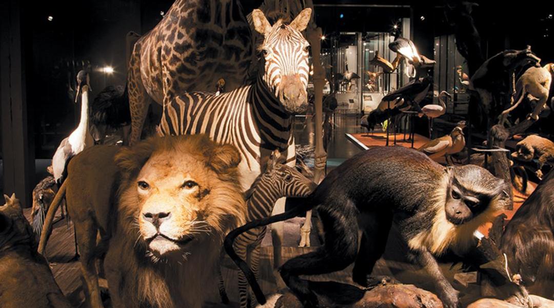 Naturhistorisches Museum NHMF